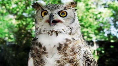 Photo of Most Awesome Owl Names List